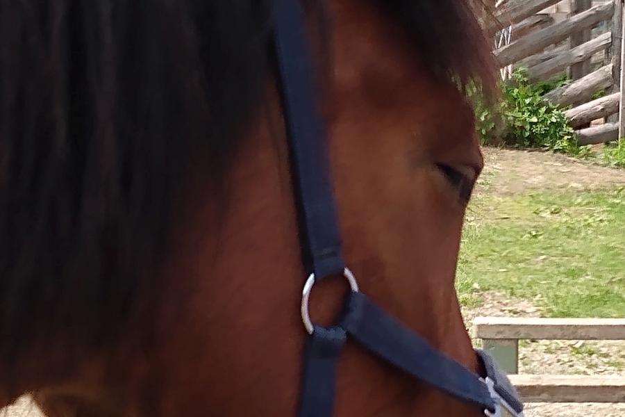 En skikkelig god hest