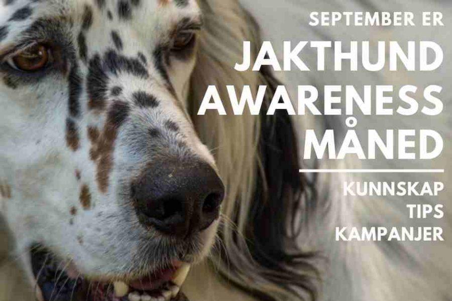 September er «Jakthund awareness»-måned
