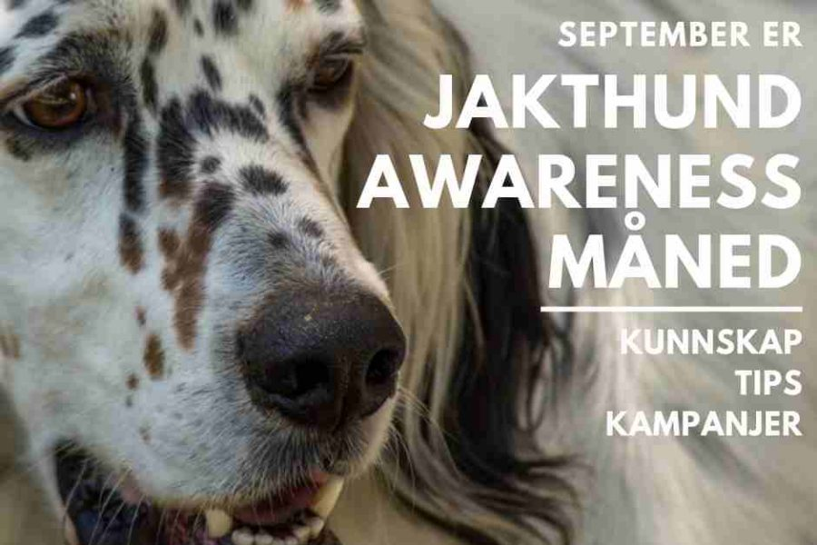 "September er ""Jakthund awareness""-måned"