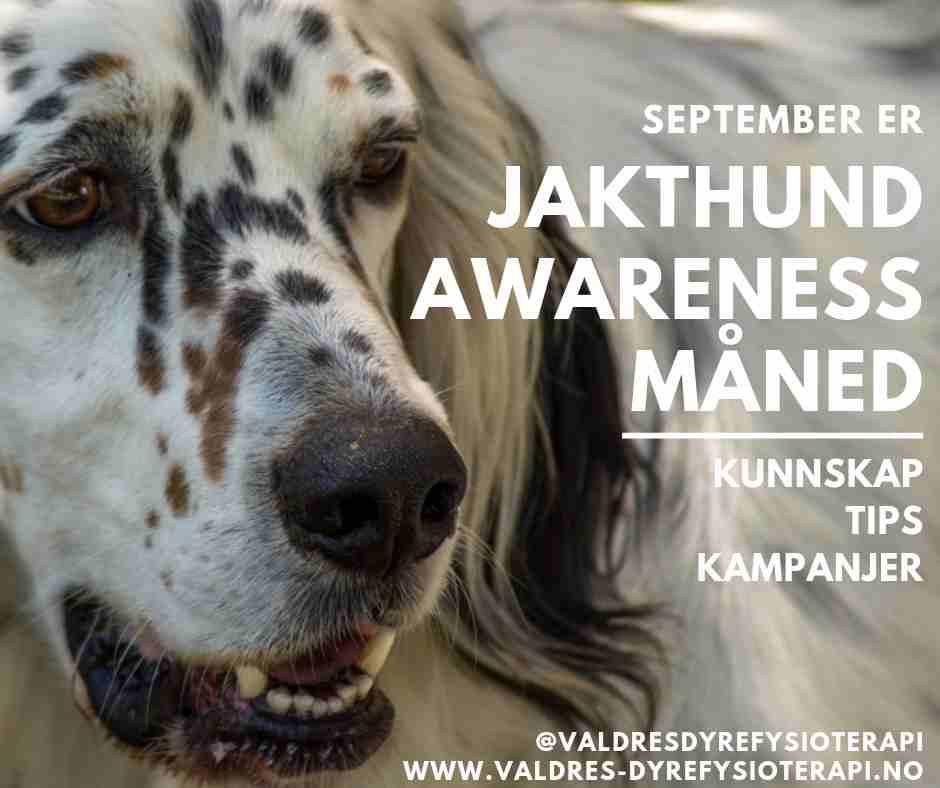 """September er """"Jakthund awareness""""-måned"""